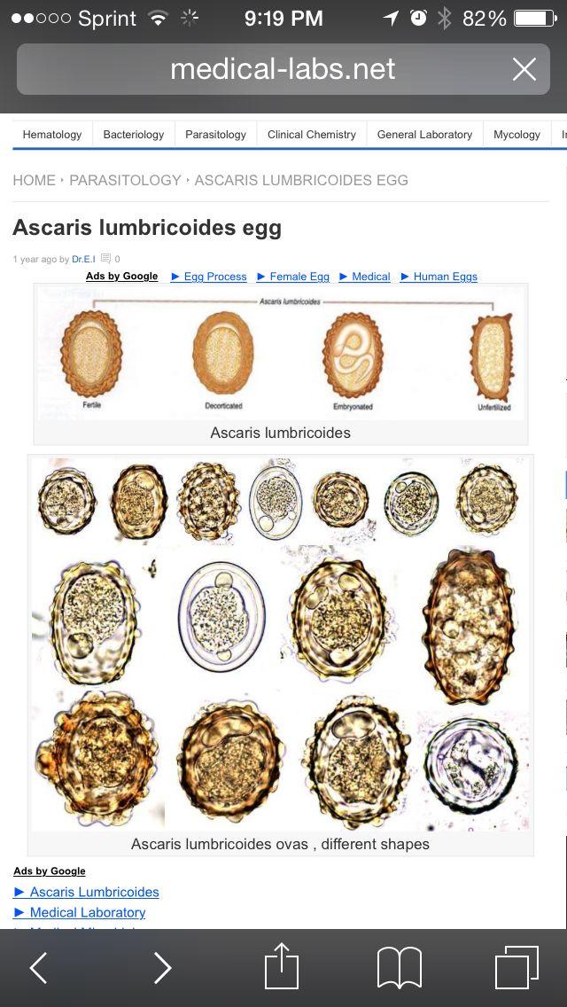 giardia helminth tojások