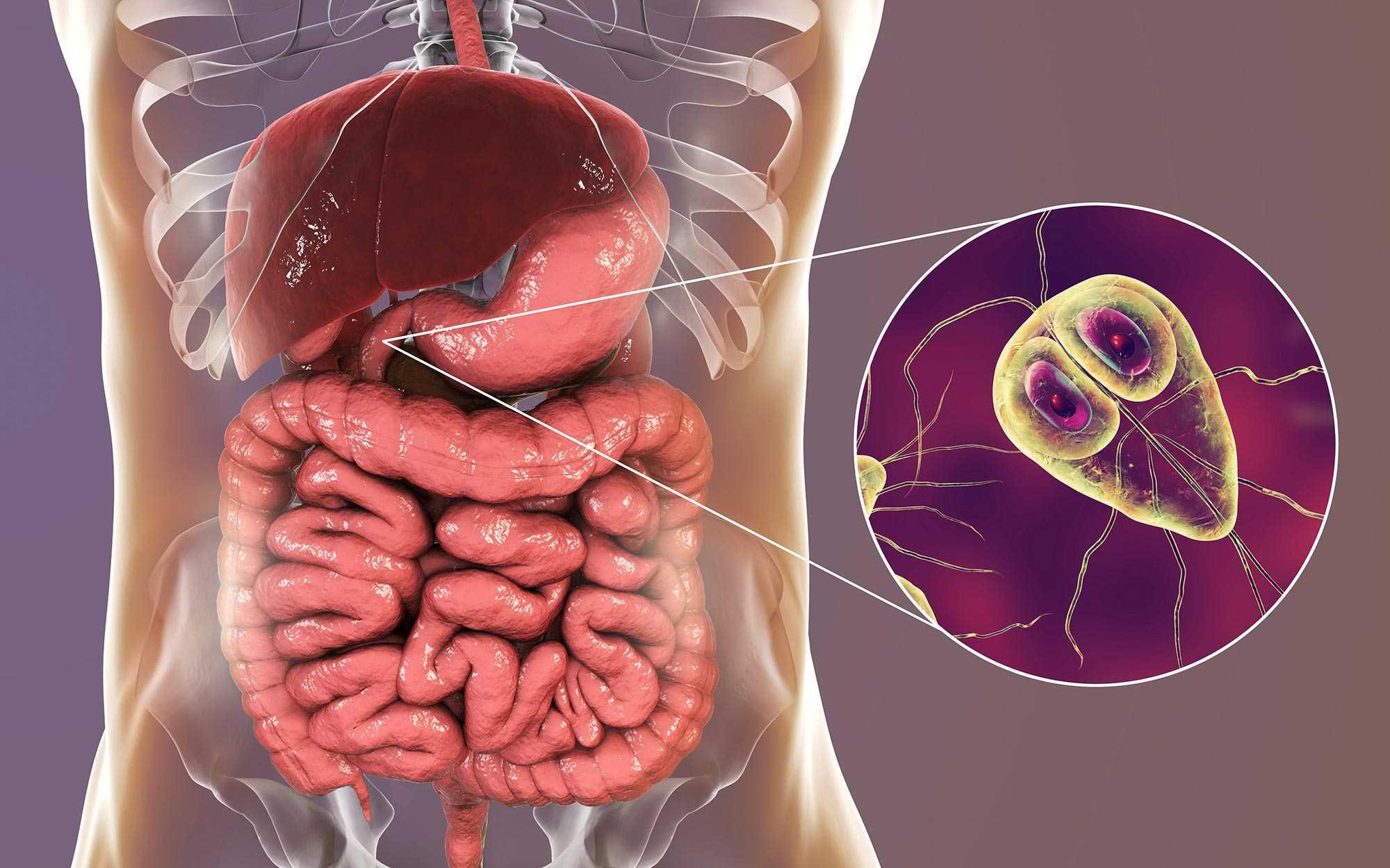 HU0301939A2 - Új probiotikumok hobbiállat-eledel kompozíciókhoz - Google Patents