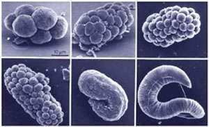 a élősködő élősködők válaszolnak Egészségügyi és járványügyi állomás Kaluga Enterobiosis