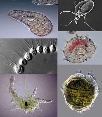 Giardia bacteria or virus