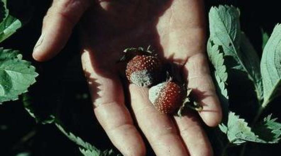 a rozsdagomba egy parazita mi a hookworm felnőttekben