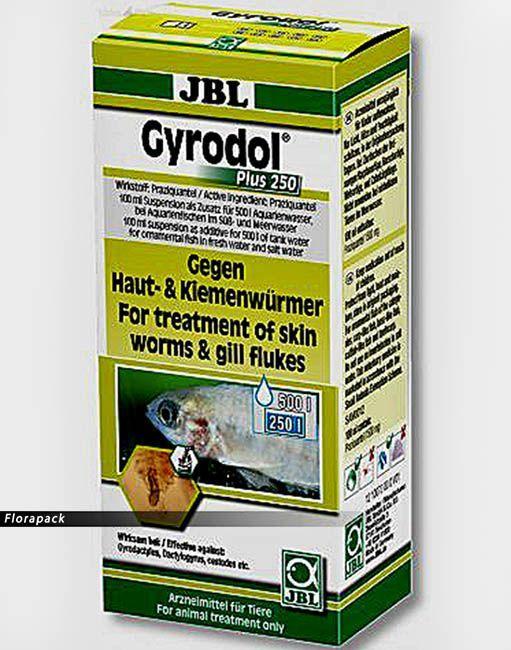 szalagféreg gyógyszer lehet felnőttnek férgei