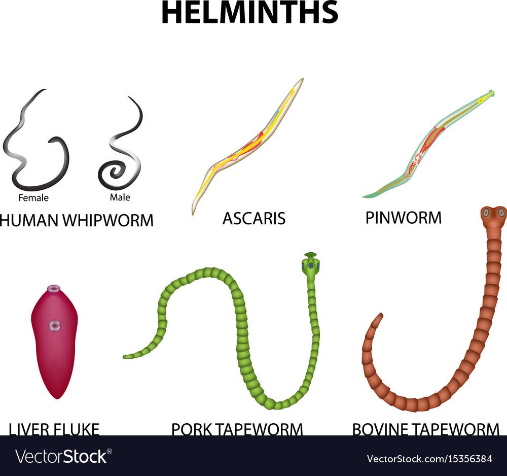 helminths flukes helminthiasis és sclerosis