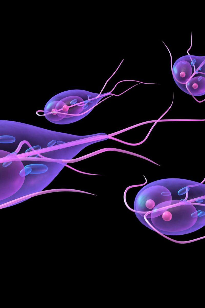 giardia parasite weight loss