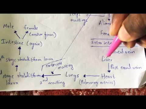 felnőttkori aszcariasis tünetek áttekintése