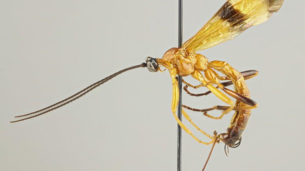 hogyan lehet eltávolítani a paraziták férgeit