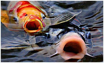 a férgekben lévő halak kezelése a tóban