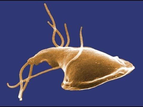 szarvasmarha szalagféreg gyomor gyomorégés és aceton szag a szájból