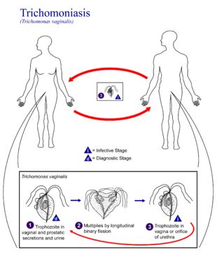 honnan származik a giardiasis