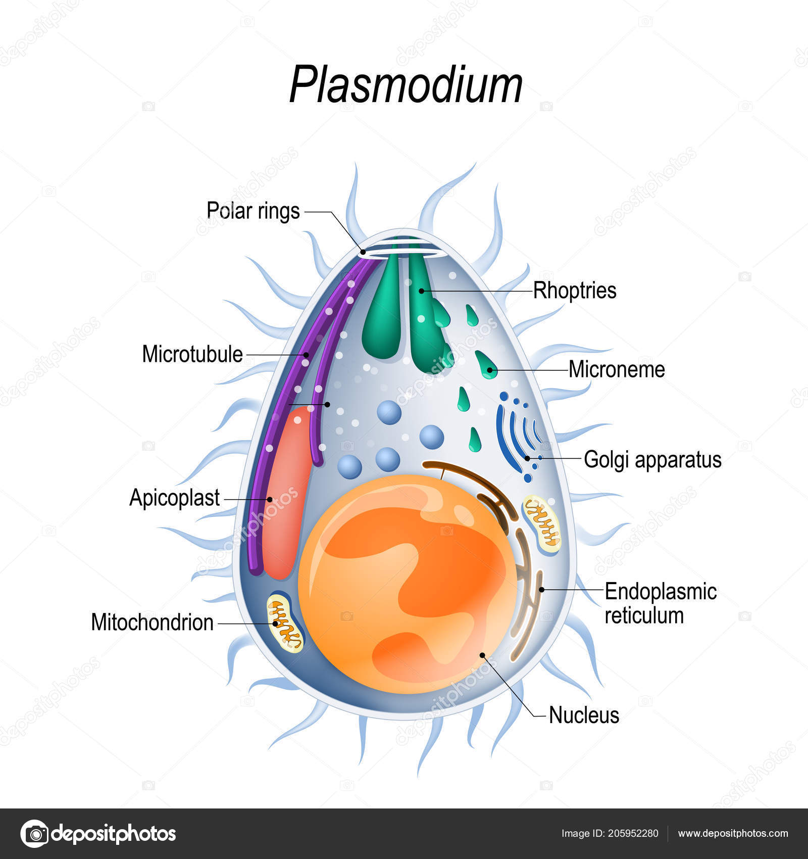 protozoaires paraziták gyógyszer a férgek számára a baba számára