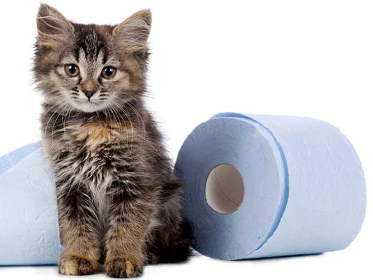 antibiotico per giardia gatto