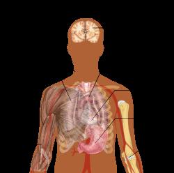 az emberi test parazitáinak gyógyítása jobb a gyermeknek van pinworms 7