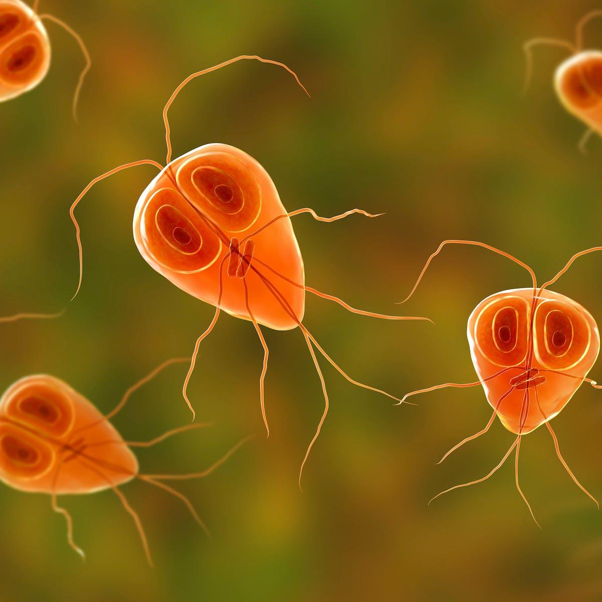 strongyloidosis pete pin férgek kezelése vény nélkül kapható gyógyszerek