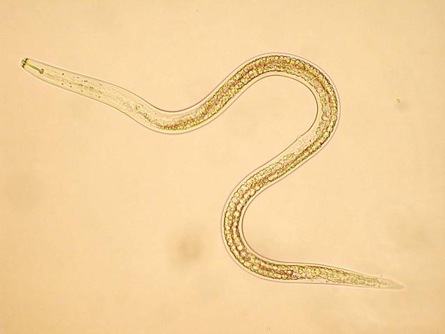Paraziták: Típusok, megelőzés és kezelés - Sanicat