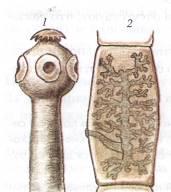a száj és az orr rothadt szaga a bélben élő paraziták általános típusai