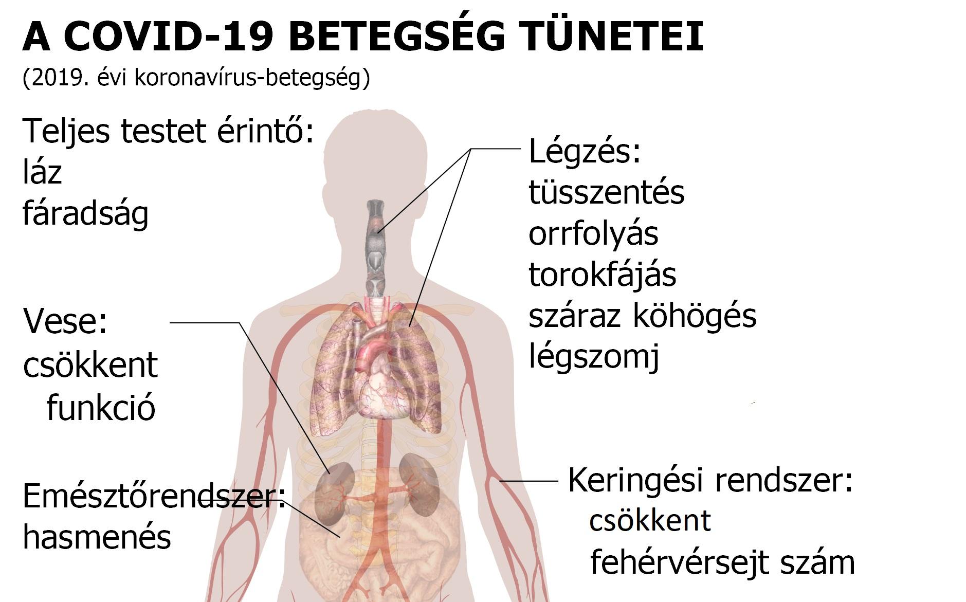 pinworms betegség életciklusa