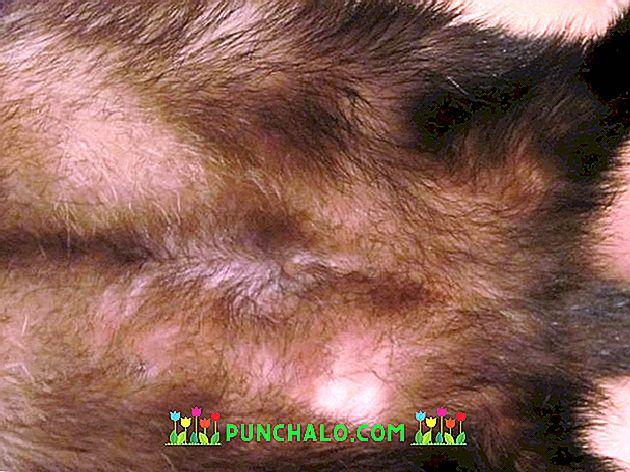 furcsa bőrparaziták rossz leheletű fórumok és megbeszélések
