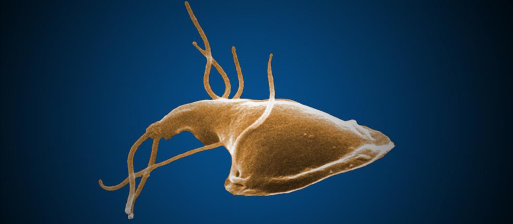 giardia parasite human symptoms bika szalagféreg vélemények