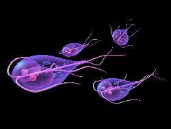 Tratament giardia bebélusi. Helminthiosis jellemző