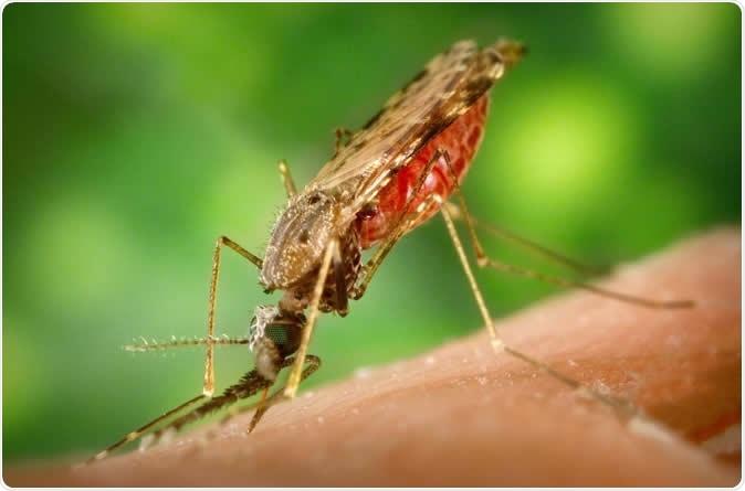 leishmania paraziták miért nincs mindenkinek rossz lehelete