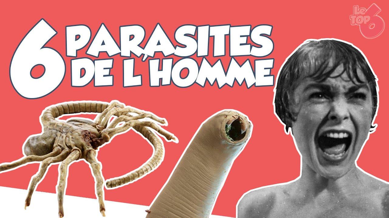les parasites de l homme