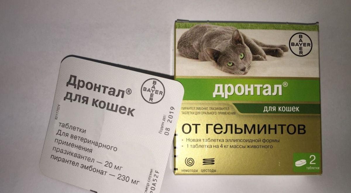 Milyen gyógyszerek az összes férgek számára?