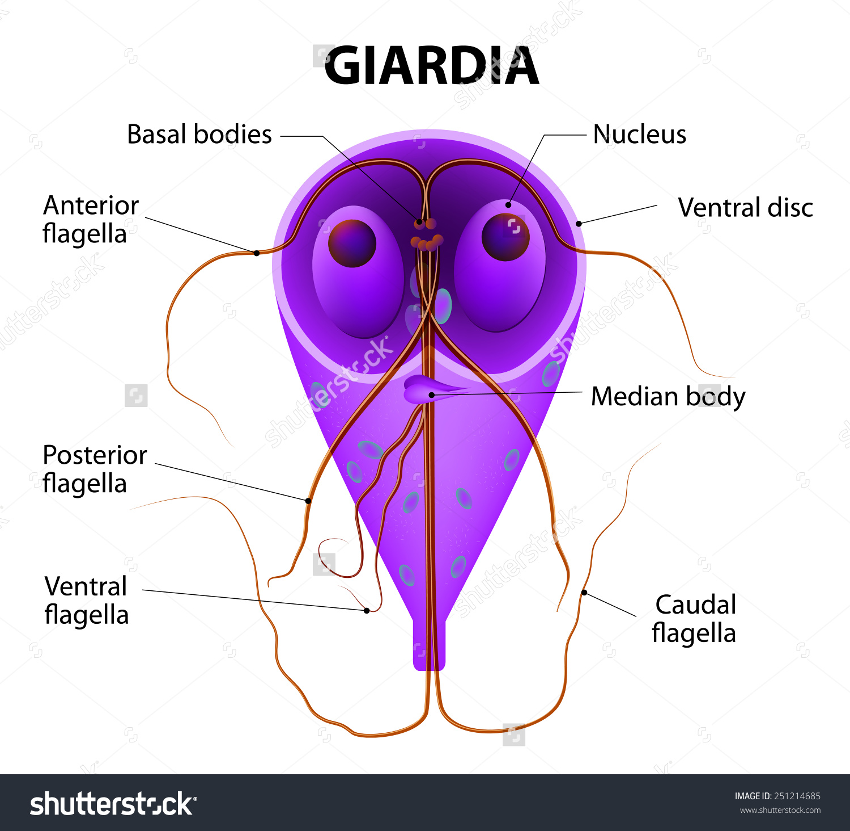 Ideiglenes parazita. Paraziták az orrdugósban, hogyan kell kezelni