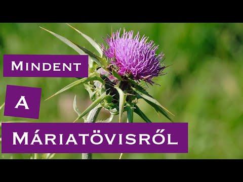 7 gyógynövény a parazitákból