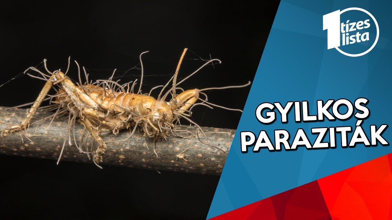 faleev tisztítja a paraziták testét Melyek a pattanásférgek tünetei