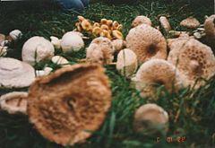 aktív szén férgek számára felnőtteknél pinworm tamponok