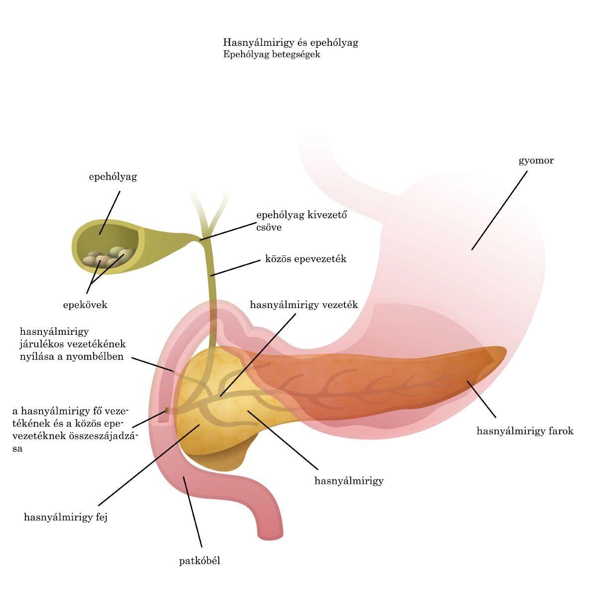 Hogyan lehet kiüríteni a parazitákat a szívből, Hogyan lehet a parazitákat kiűzni az ízületekből