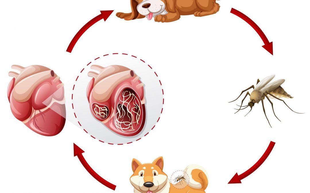 a legjobb parazitaellenes gyógyszer az emberek számára milyen helminták alakulnak ki a talajban